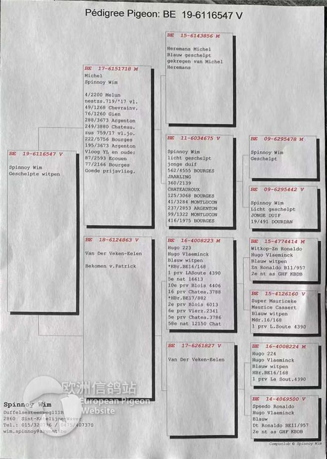 BE19-6116547血统书.jpg