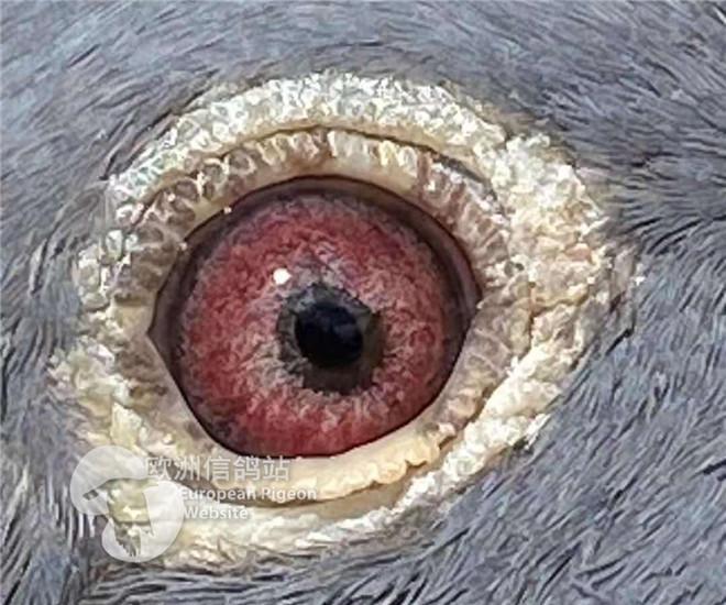 BE20-1104528眼睛2.jpg
