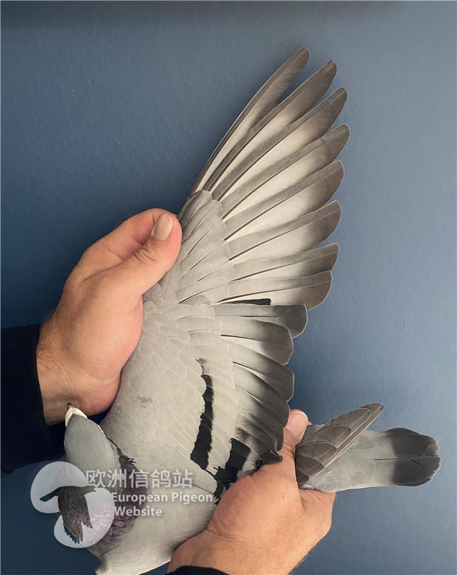 BE19-1097345翅膀1.jpg