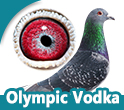 2e Int.Ace-pigeon Olympic Cat.F 2017