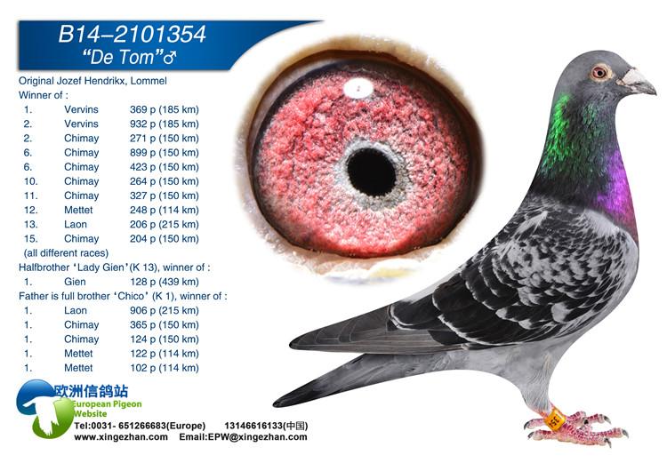 鸽子眼睛的结构
