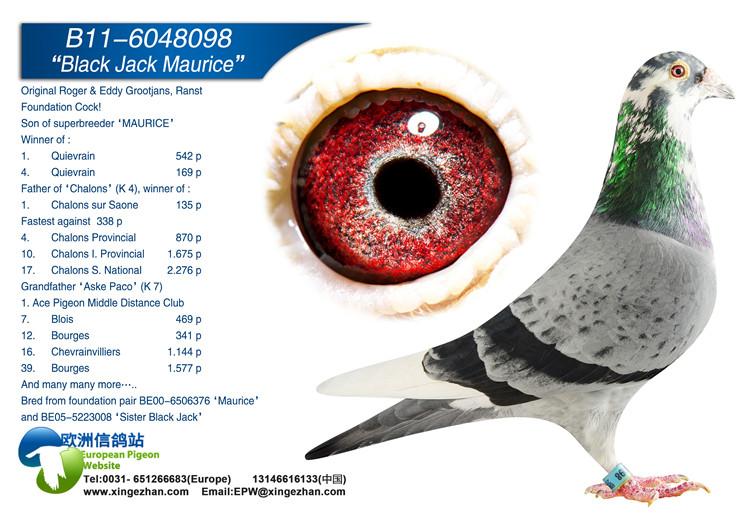 动物 鸽 鸽子 教学图示 鸟 鸟类 750_530