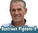 BUSTRAAN PIGEONS 9