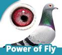 Power of Fly (DV)