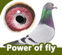 Power of Fly (BE)