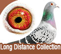 Long Distance Collection