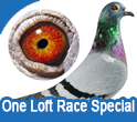 One Loft Race Special