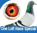 One Loft Race Special